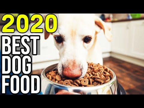 BEST DOG FOOD 2020 - Top 10