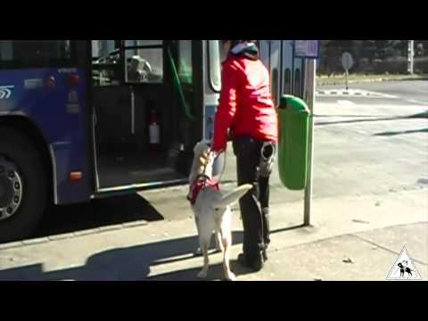 Travelling with a Guide Dog  (Part 6) (MVGYOSZ VKI)
