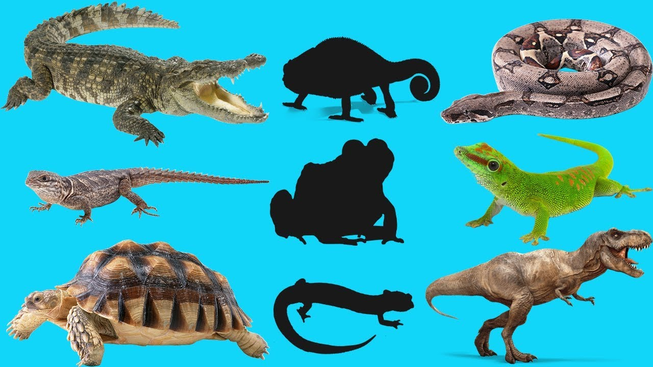 Learn Reptiles Names  Wrong Body cartoon  Video for kids