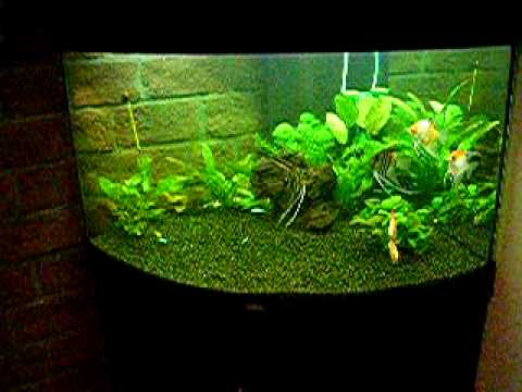 moje akwarium juwel trigon 190 fresh water fish youtube. Black Bedroom Furniture Sets. Home Design Ideas