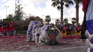 Múa Lân (Lion Dance) celebrating Tết...