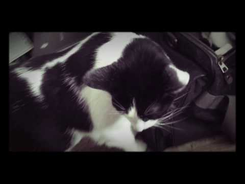 Documentary of the cat named Einstein