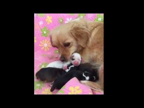 Sweetheart Mallory, Her 6 Puppies Rescued from Stuffed Shelter