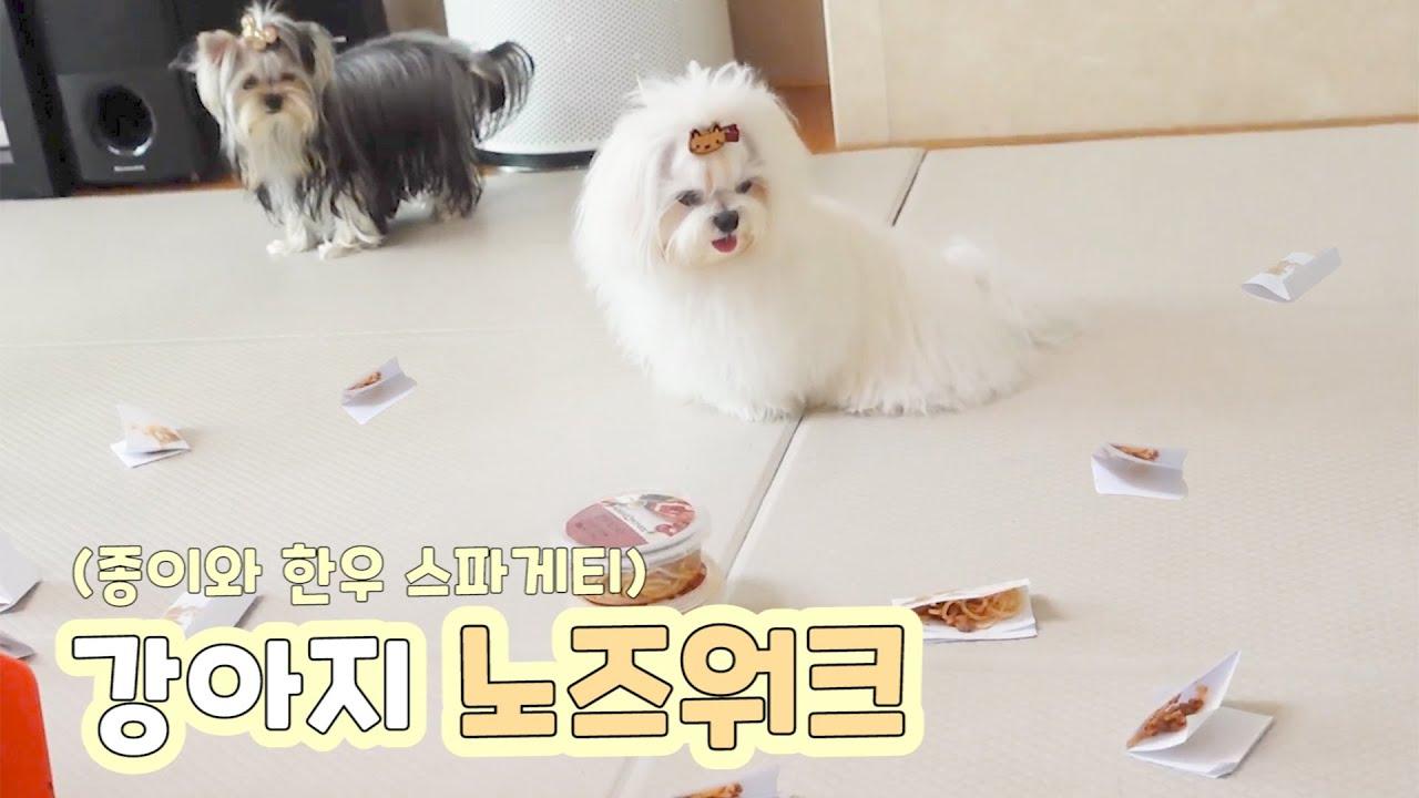 [ENG SUB] 강아지 특별한 노즈워크! 한우 스파게티를 이용한 노즈워크! 노즈워크고 뭐고 그냥 스파게티가 맛있다....