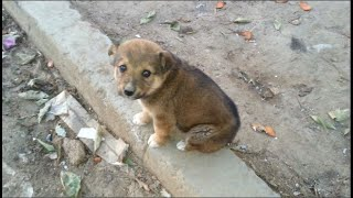 A new lost puppy suddenly appeared near a chicken market