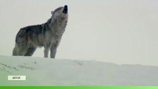 Всемирный день дикой природы отмечают в Якутии
