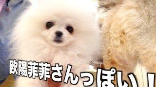 番組提供:ペットライン株式会社(http://www.petline.co.jp/) 実は番...