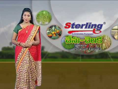 T NEWS CHENU CHELAKA PROGRAM ON Gopal vegetable Nursery- PART-03
