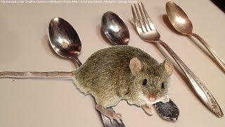NEW! - How to keep mice OUT of your house or apartment for good - Natural Way