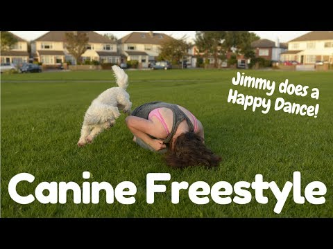 Canine Freestyle Dog Dancing (Pharrell Williams - Happy) - Fluffy Tufts