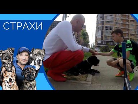 СТРАХИ (Как не развивать страхи и помочь собаке преодолевать их)