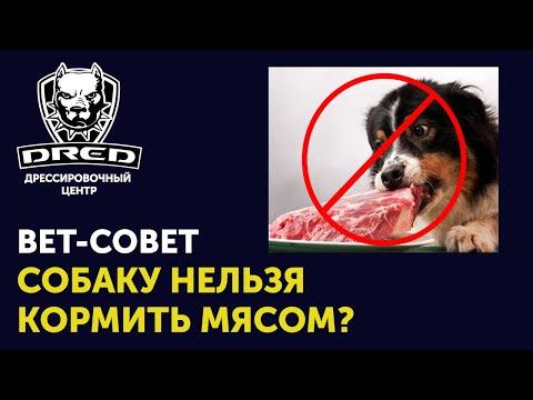Вет совет | До какого взраста не кормить собаку мясом | Как лучше всего кормить Вашу собаку