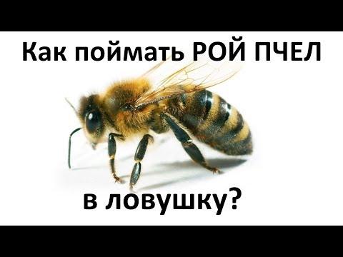 Как поймать рой пчел? Мои четыре разные ловушки для ловли пчел Какая сработает?