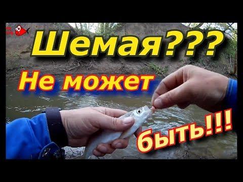 Шемая. Неожиданный улов на малой реке.