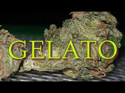 New Cannabis Strain UK And a 0.4 bong hit(🍧gelato review🍧)