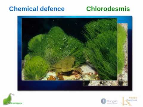 Responding to the environment -  defence  mechanisms - chemicals, thorns