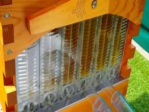 Збор мёда из улья Flow Frame