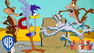 Looney Tuesdays | Coyote's Best Failed Plans | Looney Tunes | WB Kids