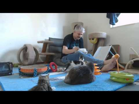 Babylon 5 Kittens - Afternoon 10-20