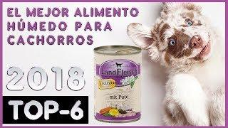 El mejor 🔥 Alimento Húmedo Para Cachorros 🐶 TOP-6 🔥