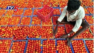 Tomato Price Drops   Experts Suggestions To Farmers   Annapurna   Telugu News   TV5 News