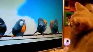 Прикольные кошки  Котенок играет с компьютерными птичками  Забавно смотреть!!
