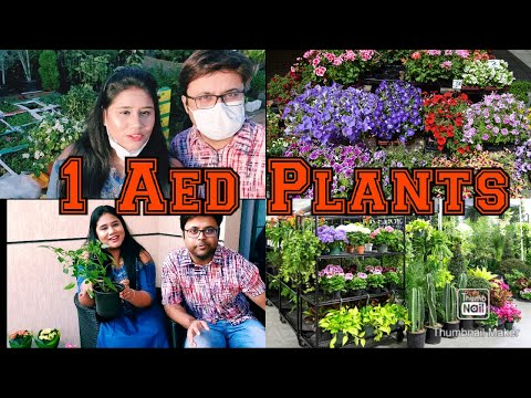 Cheapest Plants In Dubai | Only at 1 AED | Pratiksha Lifestyle Vlog