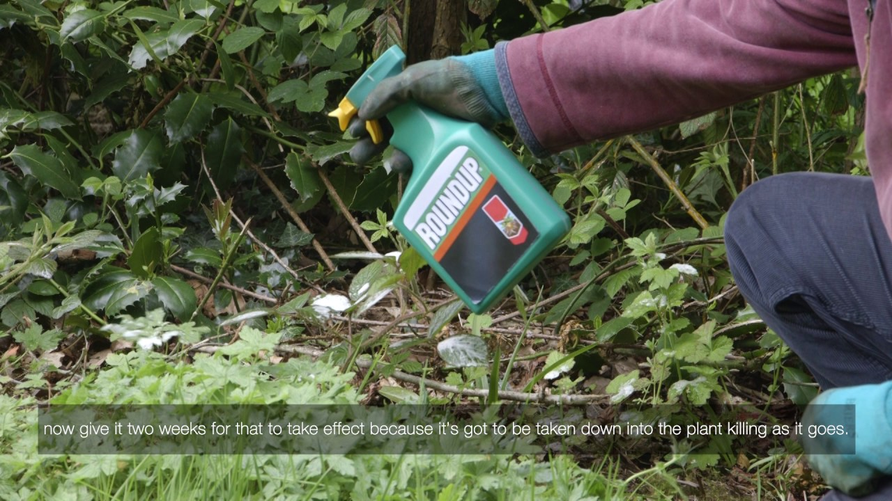 Kill weeds in flower beds - How To Prepare A Flower Bed By Killing Weeds Videos Roundup Weedkiller