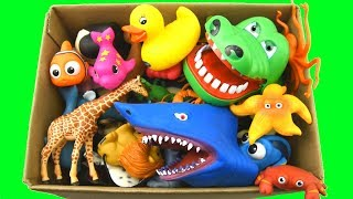 Learn Colors With Wild Animals In A Box Of Shark Toys For Kids