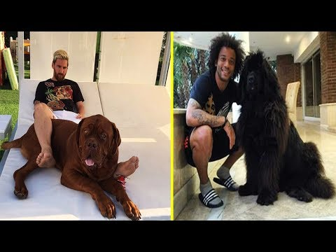 Futbolistas Famosos y Sus Perros ● Famous Footballers And Their Dogs