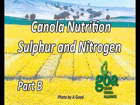 Canola and nitrogen nutrition B