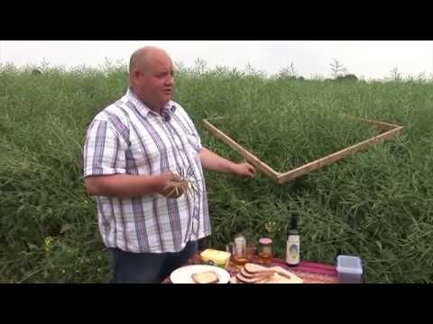Oilseed Rape - Making it Shine - Farming is Magic