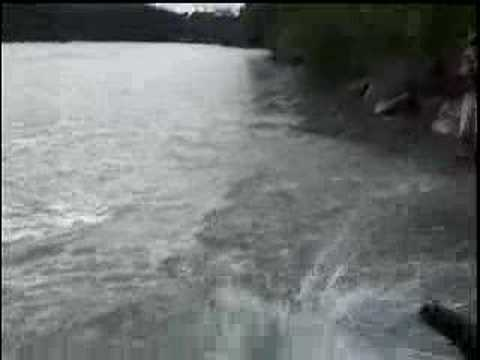 Fly fishing sockeye salmon on the kenai river in alaska for Kenai river fish counts