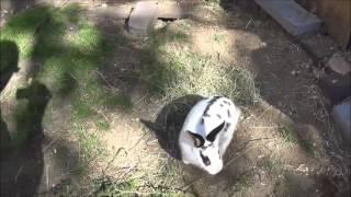 Den Bekaf 20160909 kijken naar het konijn Lisanne