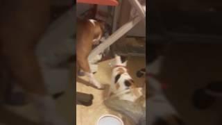 Издевательство над собакой