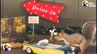 Squirrel Party: Woman Throws Themed Parties For Squirrels In Her Yard | The Dodo