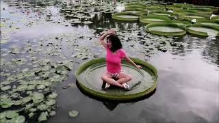 Gambar cover 意識舞蹈+大王蓮 @白河 (Dida Linda) 音樂:孫露《願做菩薩那朵蓮 》
