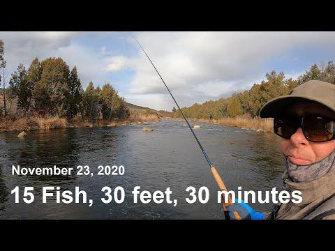 202. 15 fish, 30 feet, 30 minutes - November 23, 2020