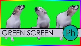 Dance till You're Dead - GREEN SCREEN -  Brasil Dancing Dog