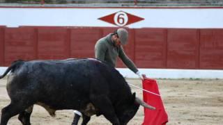 TENTADERO DE MACHOS DE LA GANADERIA DE FLOR DE JARA