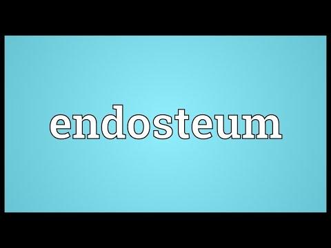 Header of endosteum