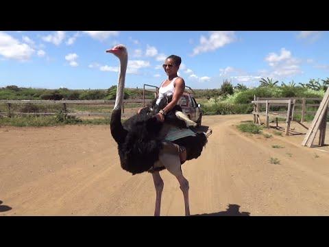 She rode an Ostrich!😮— Sailing Uma [Step 100]