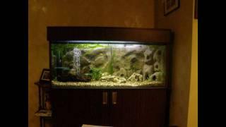 Diy 250 L Aquarium With 3d Foam Background