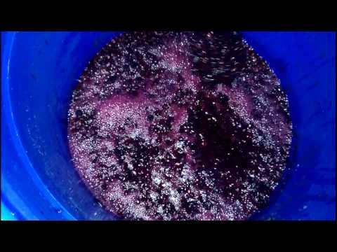 Как происходит брожение вина