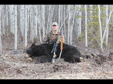 Hunting Black Bears In Northern Alberta