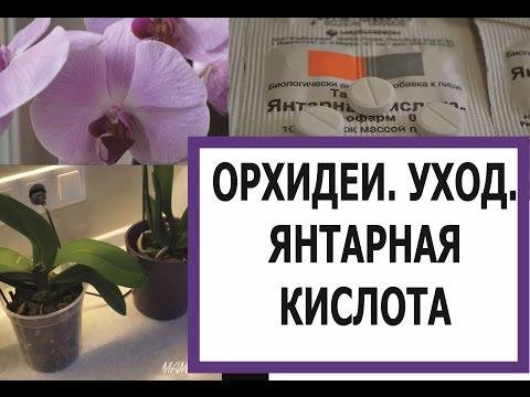 ОРХИДЕИ. УХОД. ЯНТАРНАЯ КИСЛОТА/ORCHIDS . CARE. SUCCINIC ACID