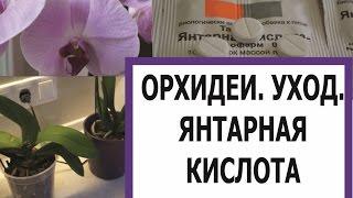 ОРХИДЕИ. УХОД. ЯНТАРНАЯ КИСЛОТА/ORCHIDS . CARE. SUCCINIC ACID(Янтарная кислота- отличное средство для стимуляции роста орхидей. Сегодня протираем листья янтарной кисло..., 2015-12-27T01:08:14.000Z)