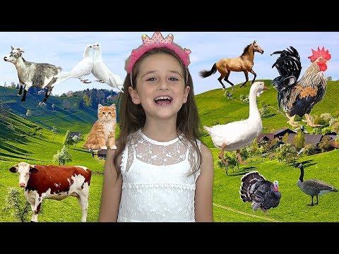 Farm Animals in Turkish | Listen to Real Sound of Farm Animals