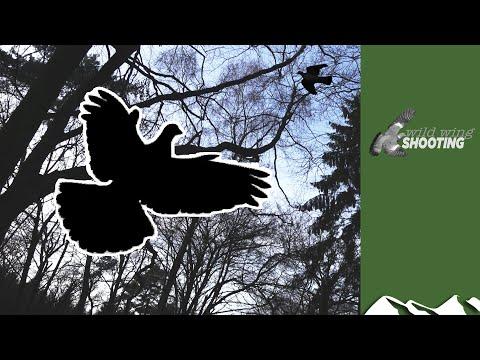 Irish Pigeon Roost Shoot