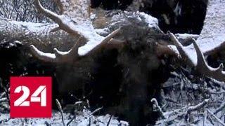 Браконьеры в погонах: Госохотнадзор меняет тактику - Россия 24